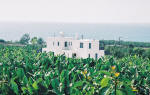 near Coral Bay in Cyprus - amongst the banana plantations